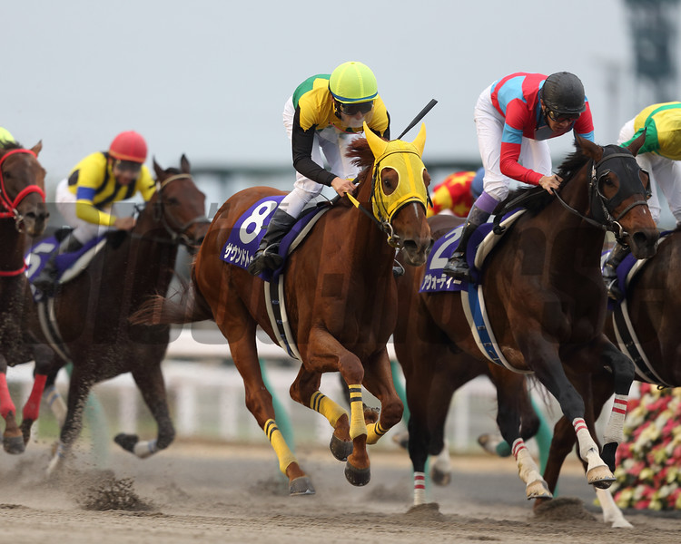 Sound True with jockey Takuya Ono wins the Champion Cup (gr. I) at Chukyo Racecourse in Japan on December 4, 2016.