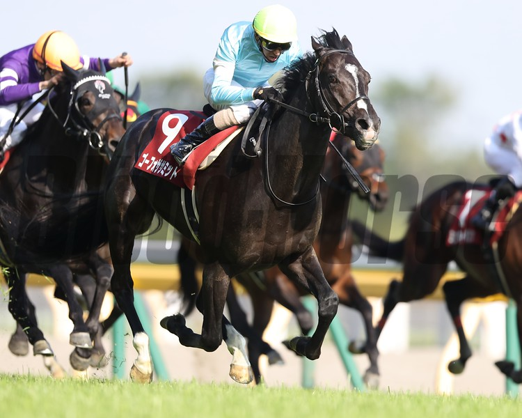 Go for the Summit wins the 2018 Aoba Sho<br /> Masakazu Takahashi