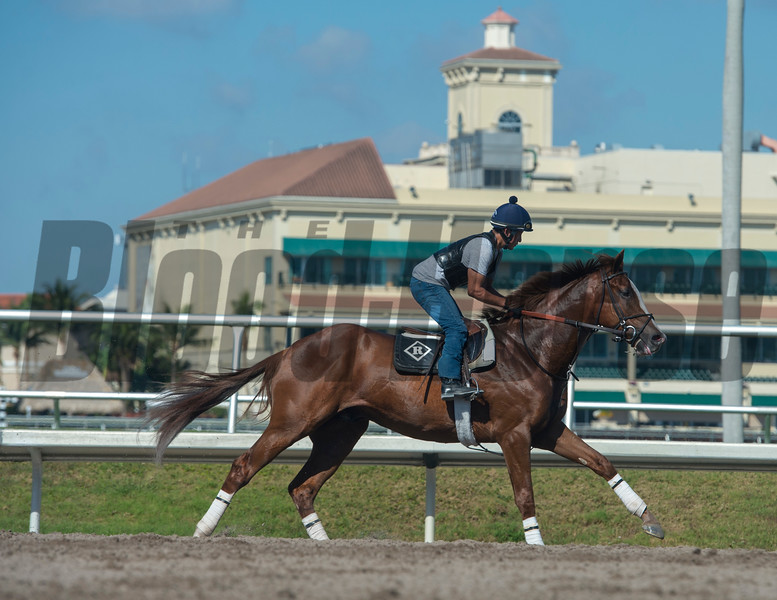 Strom Runner. with Jaun up @ Gulfstream Park. March 2  2018<br /> © Joe DiOrio/Winningimages.biz