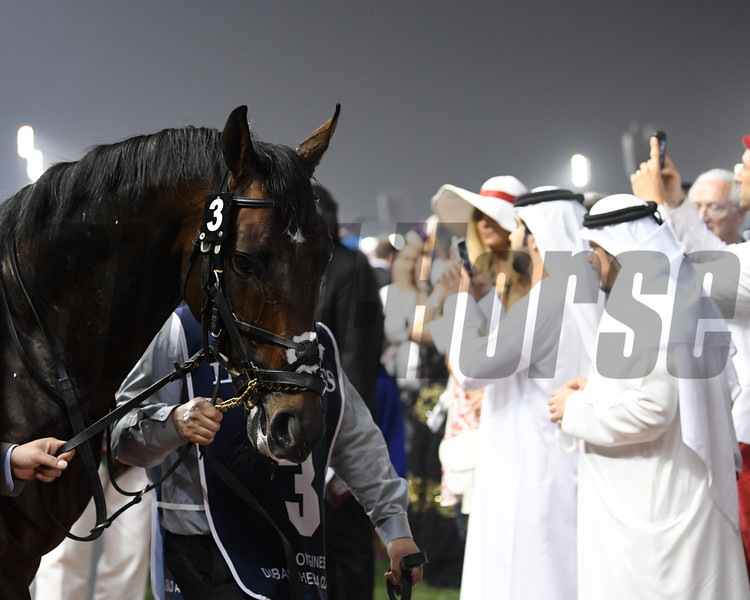 Reynaldothewizard, Dubai Golden Shaheen; G1; Meydan Race Course; Dubai; March 31 2018, 7th place