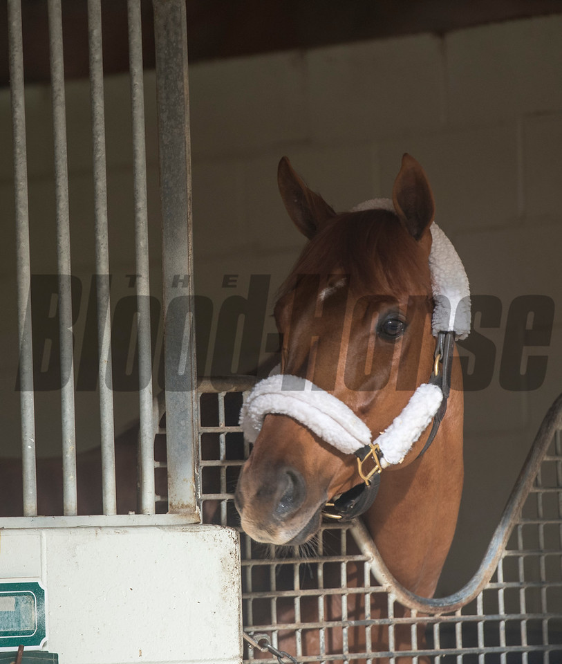 Gun Runner; Pegasus World Cup Invitational Stakes; morning after; Gulfstream Park; January 28 2018
