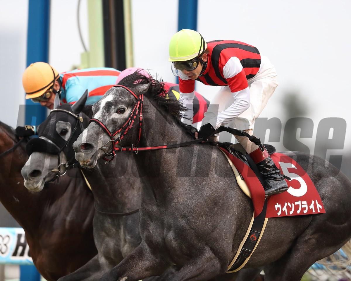 Win Bright (JPN), Nakayama Kinen, G2, February 25 2018, Nakayama Racecourse