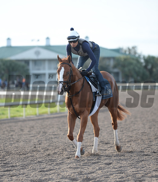 Good Magic with Walter Malasquez up    @ Palm Meadow in Fl Jan 17 2018; © Joe DiOrio/Winningimages.biz