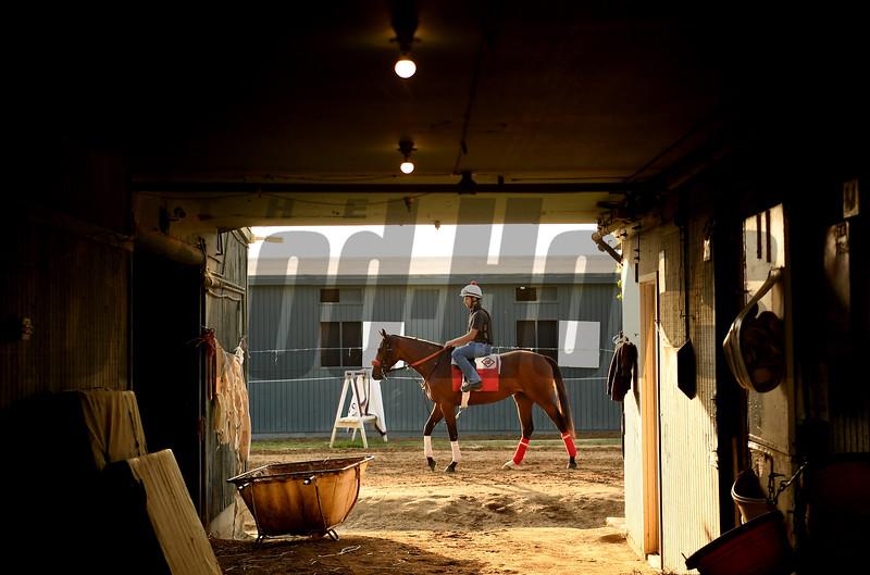 Barn foreman and exercise rider David Meah takes Fashion Island to the track for a gallop at Santa Anita. Photo: Wally Skalij