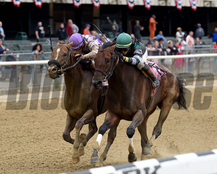 Diversify wins the 2018 Commentator Stakes at Belmont Park. Photo: Coglianese/Chelsea Durand