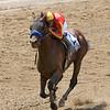 Hoppertunity wins 2018 Brooklyn Invitational Stakes at Belmont Park June 9, 2018. Photo: Coglianese Photo/Annette Jasko