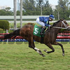 Imprimis - Maiden Win, Gulfstream Park, February 2, 2018<br /> Coglianese Photos/Leslie Martin