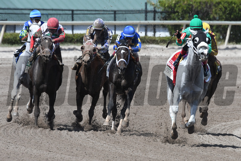 Conquest Big E wins the 2018 Gulfstream Park Hardacre Mile<br /> Coglianese Photos/Andie Biancone