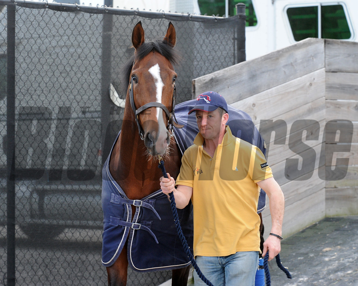 Toast of NY, arrival, Pegasus World Cup, Gulfstream Park, January 20 2018