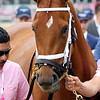 Monomoy Girl Kentucky Oaks Chad B. Harmon