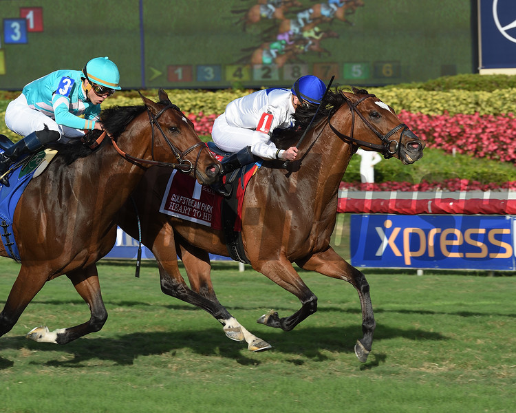 Heart to Heart wins the 2018 Gulfstream Park Turf Stakes<br /> Coglianese Photos/Lauren KIng
