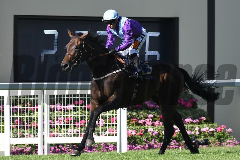 Dash of Spice; Silvestre De Sousa; win the Duke of Edinburgh Stakes; Royal Ascot; Ascot Race Course; Ascot; UK; 6-22-18; Photo by Mathea Kelley