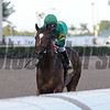 Mask wins the 2018 Mucho Macho Man Stakes<br /> Coglianese Photos/Kenny Martin