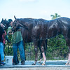Free Drop Billy. bathing  @ Gulfstream Park. March 2  2018<br /> © Joe DiOrio/Winningimages.biz