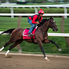 Travers Stakes entrant Wonder Gadot with regular exercise rider aboard cruises at full speed during her final breeze before next Saturday's race Friday Aug. 17, 2018 at the Saratoga Race Course in Saratoga Springs, N.Y.  (Skip Dickstein