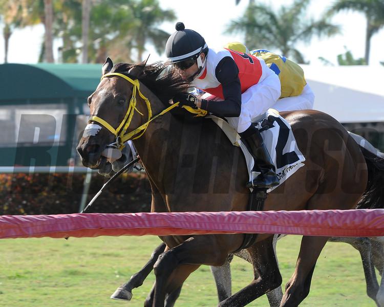 Conquest Sandman, Carlos Montalvo, Miesque's Approval  Stakes, $75,000, Gulfstream Park, April 28, 2018