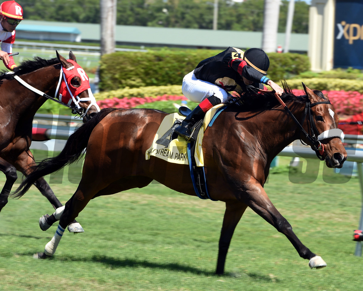Holy Helena, Irad Ortiz Jr., The Very One Stakes, G3T, Gulfstream Park, March 3 2018