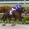 Shanghai Starlet wins the 2018 Panama City<br /> Coglianese Photos/Lauren King