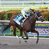 Capture Your Dream wins the 2018 FTBOA Florida Sire Desert Vixen Stakes<br /> Coglianese Photos/Lauren King