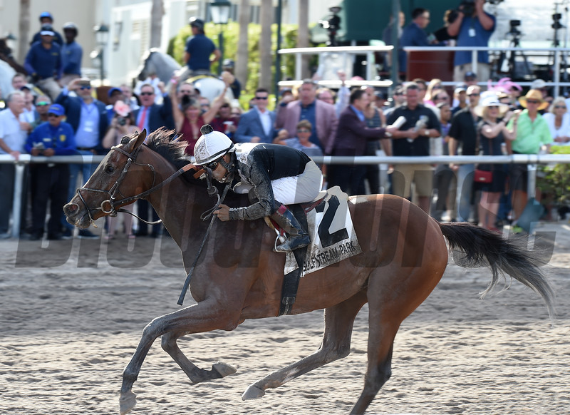 Coach Rocks wins the Gulfstream Park Oaks<br /> Coglianese Photos/Lauren King