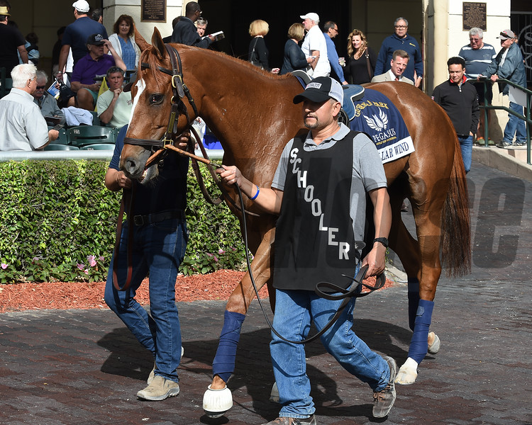 Stellar Wind - Gulfstream Park, January 25, 2018<br /> Coglianese Photos/Lauren King