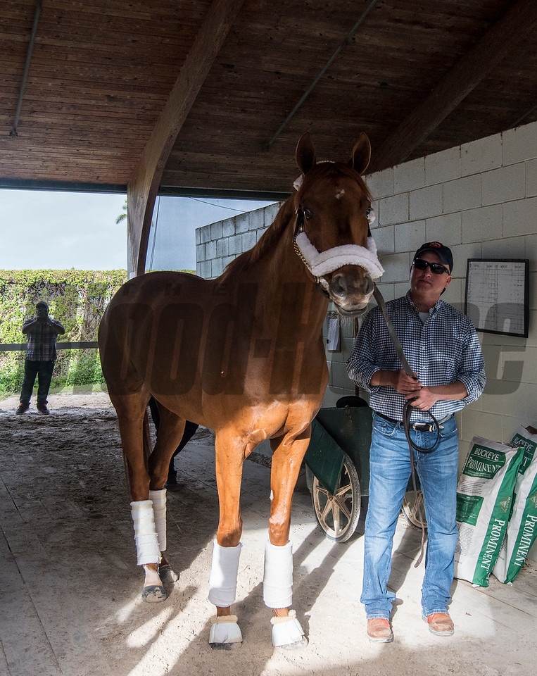Gun Runner & Scott Blasi ; morning after; The Pegasus Cup; @ Gulfstream Park; Jan 28 2018; Joe DiOrio/Winningimages.biz