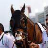 Reynaldothewizard, Dubai Golden Shaheen; G1; Meydan Race Course; Dubai; March 31 2018, 7th place
