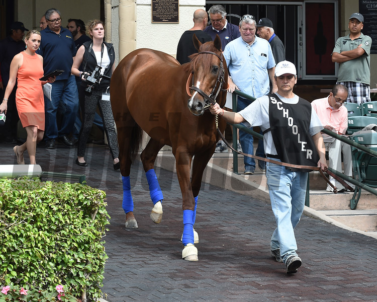 Collected - Gulfstream Park, January 25, 2018<br /> Coglianese Photos/Lauren King