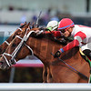 Shining Copper wins the 2018 Ft. Lauderdale Stakes<br /> Coglianese Photos/Kenny Martin