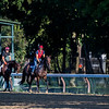 Travers entrant Mendelssohn, left and his stablemate Seahenge get their first look at the historic Saratoga Race Course this morning after arriving from the training stable of Aiden O'brien in Ireland Thursday  Aug. 23, 2018  in Saratoga Springs, N.Y. (Skip Dickstein