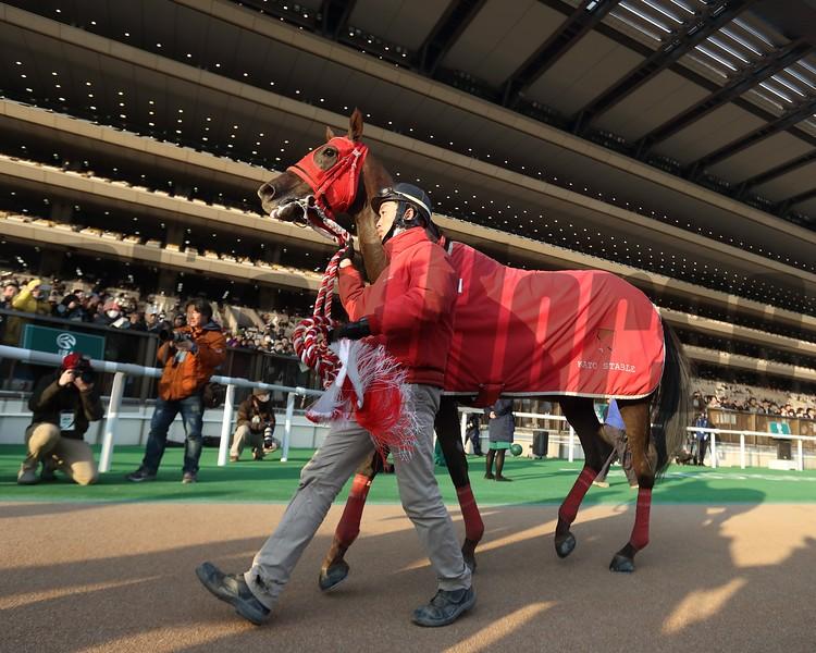 Nonkono Yume, Negishi Stakes, G3, Tokyo, January 28 2018