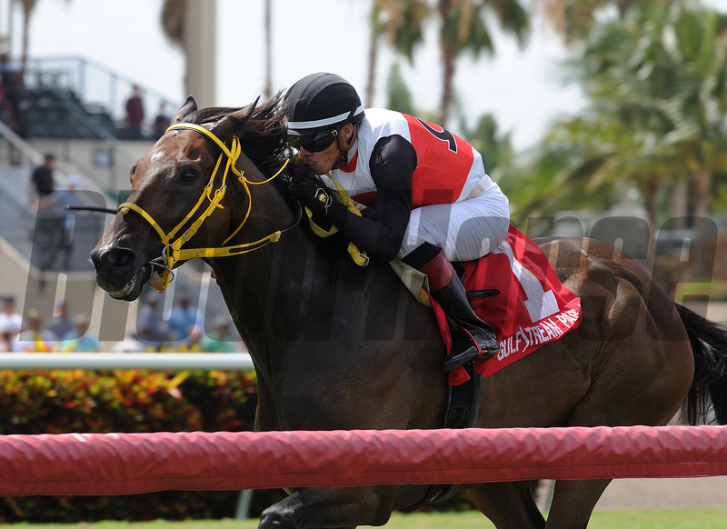 Conquest Sandman wins the Mecke Stakes at Gulfstream Park Sunday, July 8, 2018. Photo: Coglianese Photos/Kenny Martin