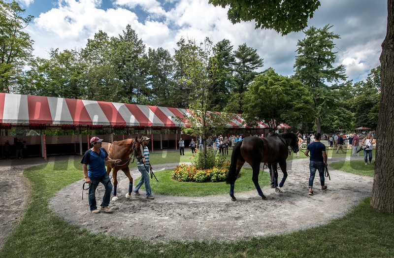 Morning line favorite Good Magic, left and second favorite Gronkowski school in the paddock between races at the  Saratoga Race Course Thursday  Aug. 23, 2018  in Saratoga Springs, N.Y. (Skip Dickstein)
