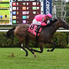 Ruby Notion wins the 2018 Caress Stakes<br /> Coglianese Photos/Susie Raisher