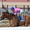 Holiday Disguise wins the 2018 Biogio's Rose<br /> Coglianese Photos/Chelsea Durand
