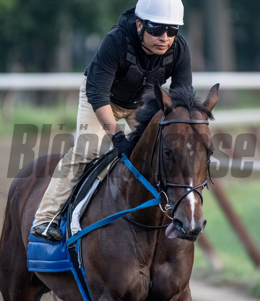 Well know horse Bolt D'Oro goes out for morning exercise at the Oklahoma Training Track Thursday  Aug. 9, 2018 in Saratoga Springs, N.Y.(Skip Dickstein