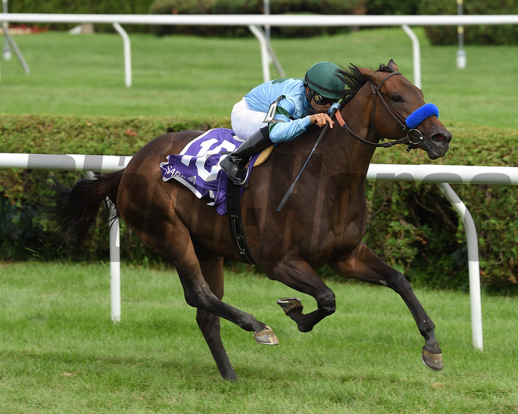 Broadway Run wins the 2018 Coronation Cup<br /> Coglianese Photos/Chris Rahayel