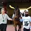 Torcedor (IRE), Dubai Gold Cup; G2; Meydan Race Course; Dubai March 31 2018, 15th place