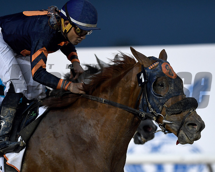 Mind Your Biscuits, Joel Rosario, win the Dubai Golden Shaheen, DWC 2018, Meydan Race Course, Dubai, UAE, 3-31-18, photo by Mathea Kelley/Dubai Racing Club
