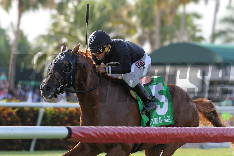 Gemonteer wins the Not Surprising Stakes at Gulfstream Park Saturday, July 7, 2018. Photo: Coglianese Photos/Kenny Martin