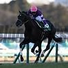 Generale Uno, Keisei Hai Stakes, G3, Nakayama Racecourse, January 14 2018