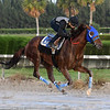 Gunnevera<br /> Gulfstream Park, January 13, 2018<br /> Coglianese Photos/Lauren King