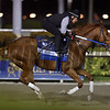 Gun Runner - Gulfstream Park, January 20, 2018<br /> Coglianese Photos/Lauren King