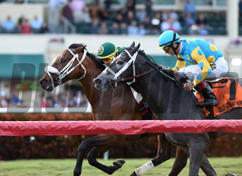 Speed Franco wins the 2018 Dania Beach Stakes<br /> Coglianese Photos/Lauren King