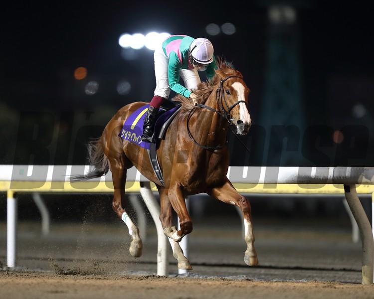 Brave, Yuichi Fukunaga, Diolite Kinen, Funabashi Racecourse, March 14 2018
