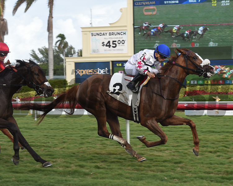 Liberty Kitten - AOC, Gulfstream Park, January 11, 2018<br /> Coglianese Photos/Leslie Martin