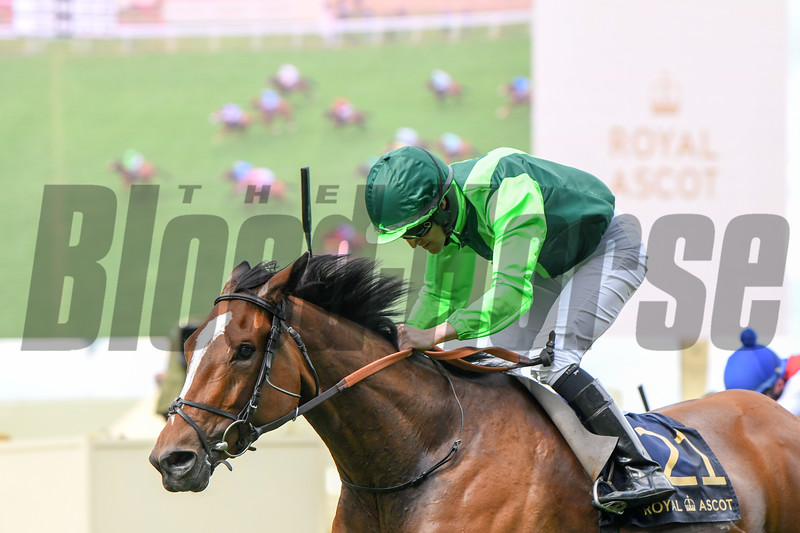 Settle for Bay; WJ Lee win the Royal Hunt Cup; Royal Ascot; Ascot Race Course; Ascot; UK; 6-20-18; Photo by Mathea Kelley