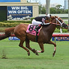 Pay Any Price wins the 2018 Bob Umphrey Turf Sprint<br /> Coglianese Photos/Leslie Martin