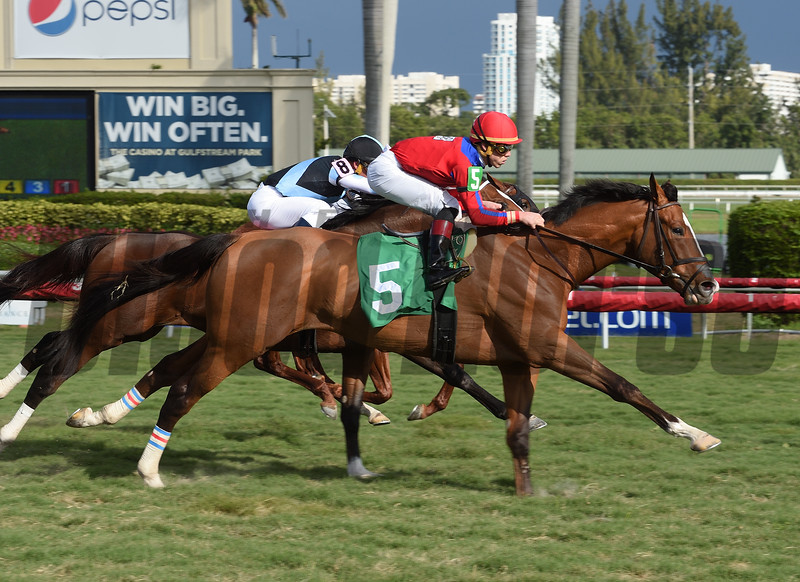 Hawkish - Maiden Win, Gulfstream Park, January 6, 2018<br /> Coglianese Photos/Leslie Martin