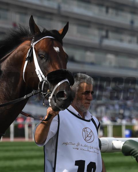 Kimbear, Godolphin Mile; Meydan Race Course; Dubai; March 31 2018, 6th place